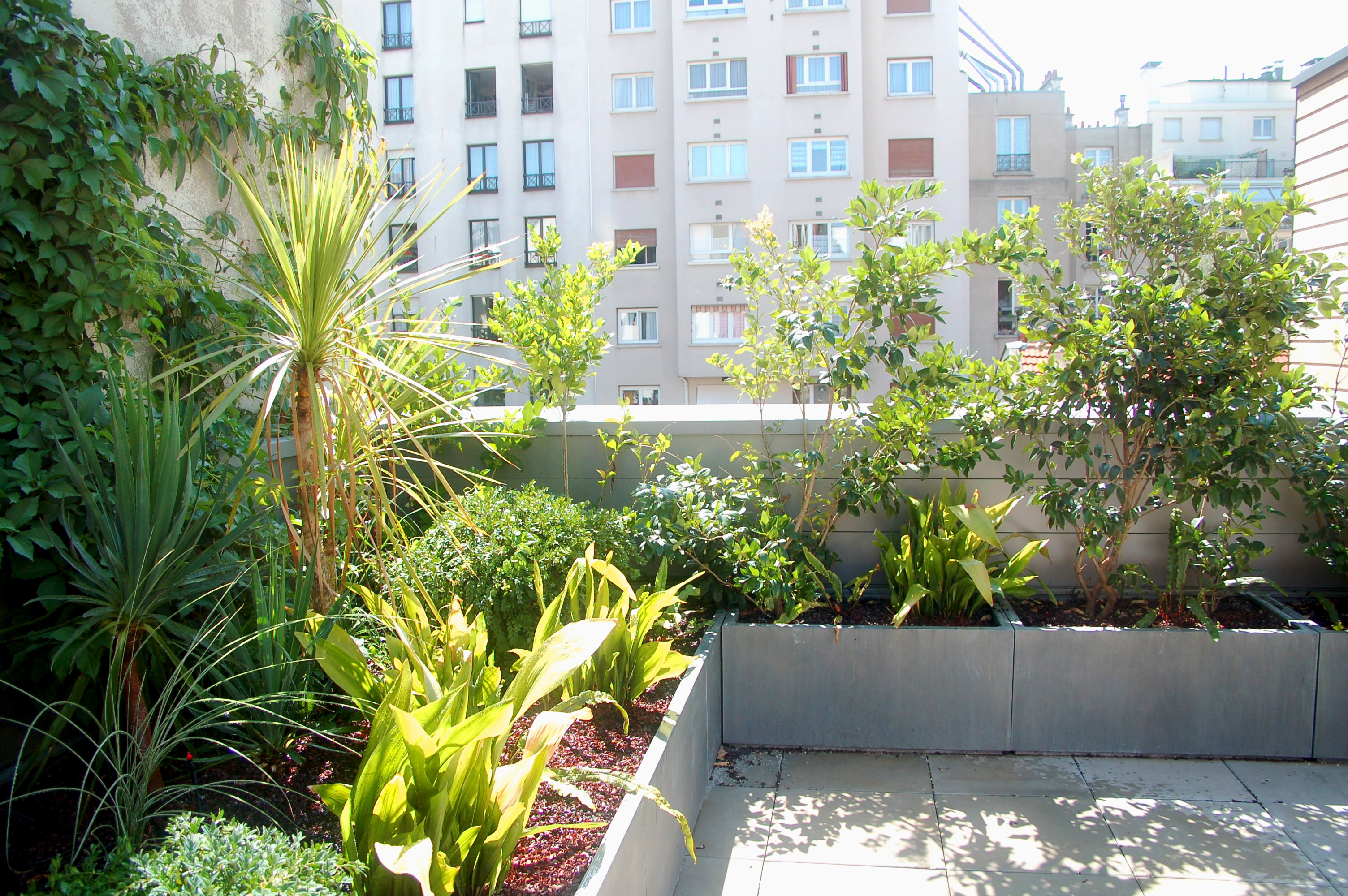 Terrasse et balcon paysagiste paris 75 apex paysage for Terrasse amenagement plantes