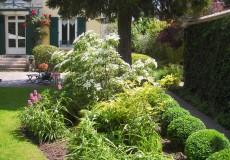 Composition végétale réalisée autour d'un Cornus kousa en fleur, Meudon