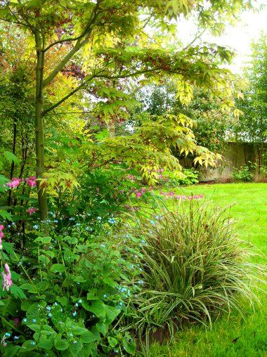 Plantations composées d'une végétation graphique, feuillage fin et floraison légère